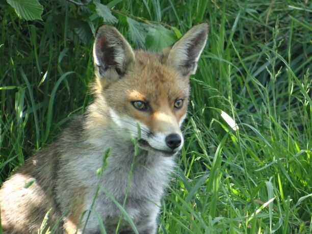 Favourite fox photo I have taken