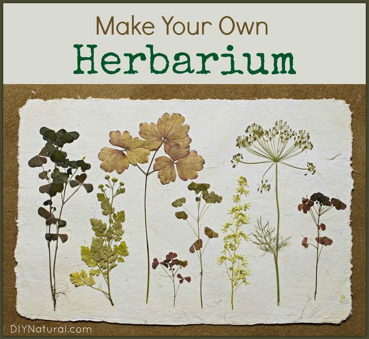 An herbarium is an identification book that you can create from a collection of dried plants, that can (and should) be personalized to your tastes and/or area.