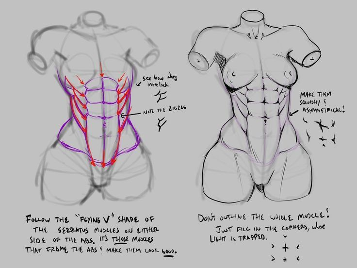 Drawing Reference In 2020 Body Reference Drawing Female Anatomy Reference Drawing Reference