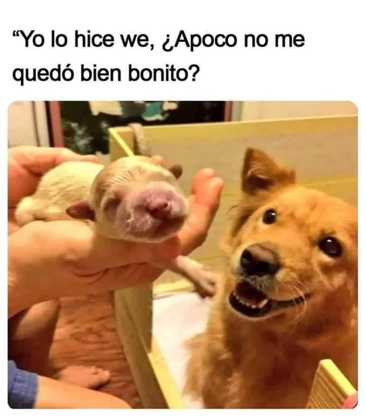 Mi Perrito Humor Divertido Sobre Animales Memes Perros Humor De Perros