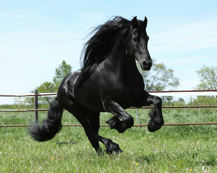 The Best Top Friesian Black Horses Wallpapers Beautiful Pictures In All Kind Of Resolutions And Sizes