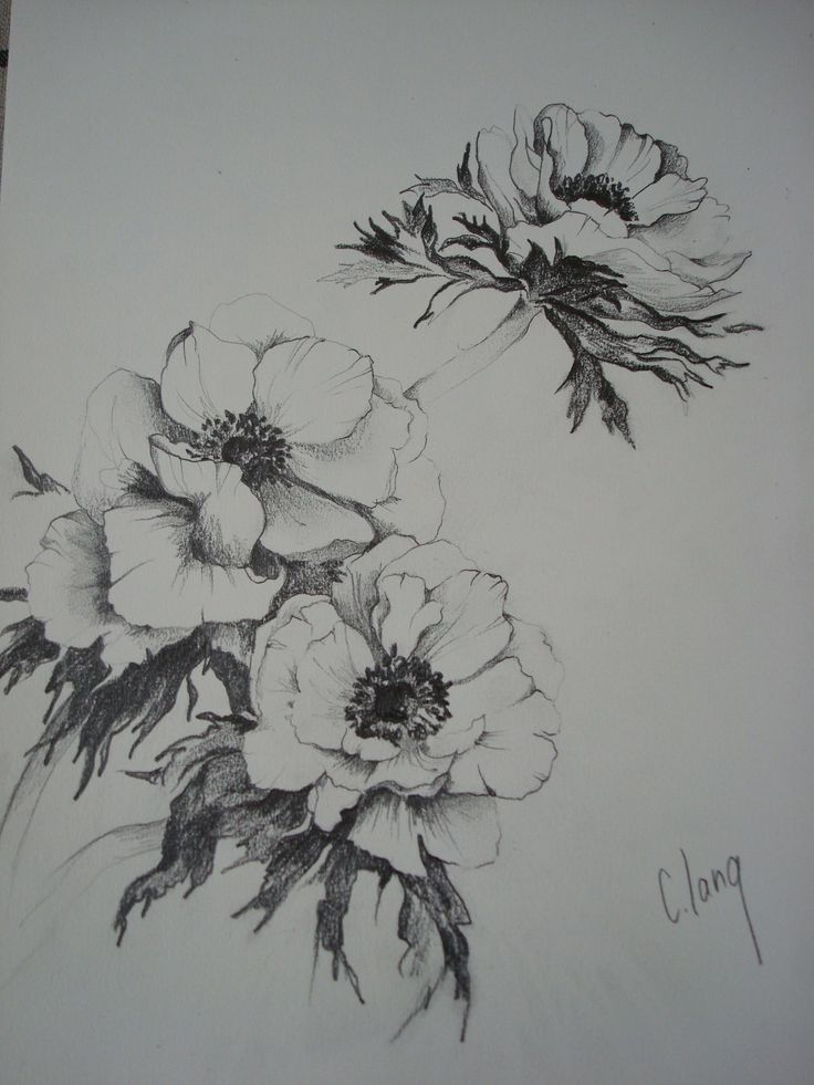 "http://chalang.wordpress.com .""les anemones""drawing by Chantal Lang"