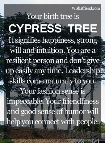 Your Birth Tree: Cypress Tree  February