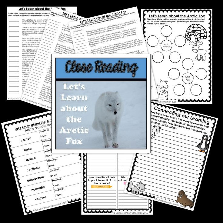 This Close Reading article and supplementary materials will take your students through the Close Reading process and would work well as an introduction to Arctic Fox research or a study of arctic animals. It includes a thinking map for pre-reading, a response sheet for post reading day 1 or 2, and a written prompt for after the third reading. The set is intended to be used in multiple sessions for deepening student understandings and reflections.