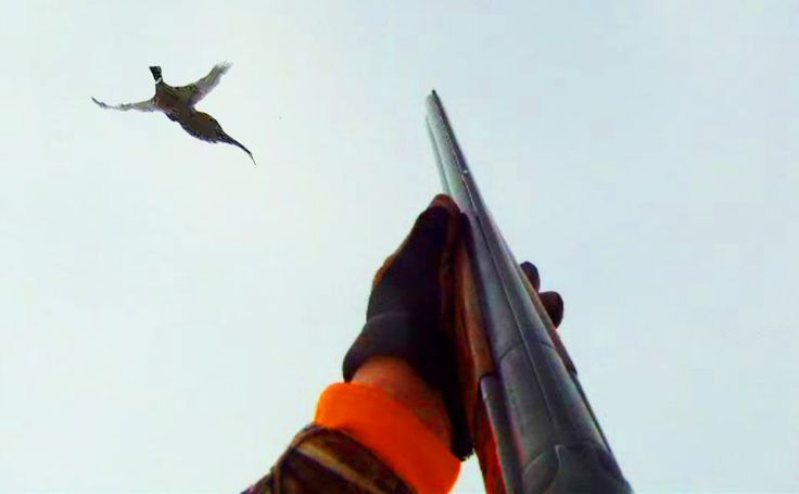South Dakota pheasant hunting provides a tremendous economic boost to the state. In 2005, pheasant hunting brought in over 153 million dollars.