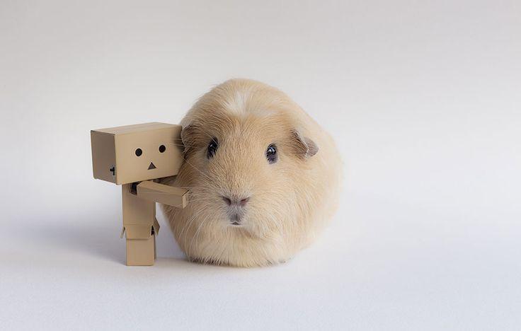 BooBoo y sus amigos conejillos de Indias son la sensación de la internet | videografoto