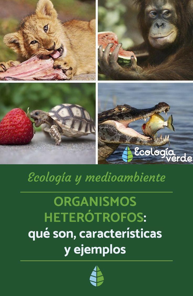 Organismos Heterotrofos Que Son Caracteristicas Y Ejemplos Resumen Animales Ecologia Zoologia