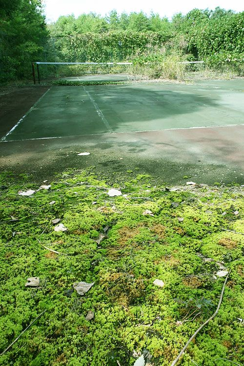 abandoned tennis court