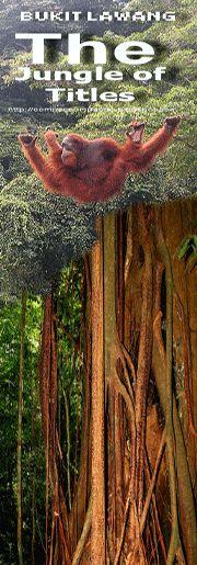 MEN OF THE WOOD  - Indonesia -Sumatera-Bukit Lawang  l  Tangkahan  l  Berastagi  l  Kuta Cane: Green Xplorer  l  Indonesia  l  Sumatera  l  Bukit...