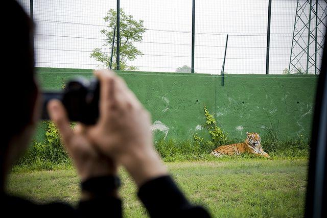 SafariRavennaDossier: Questo progetto curato da Essere Animali e supportato dalle dichiarazioni di etologi, biologi e psicologi d'indiscussa competenza, è stato realizzato nella primavera del 2013 all'interno dello zoo inaugurato l'anno precedente nelle adiacenze del parco divertimenti Mirabilandia.