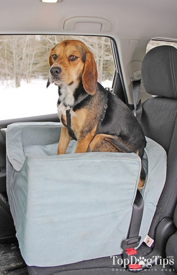 Best Dog Car Seat >> The 10 Best Dog Car Seats Best Reviews Of Dog Products Dog Car