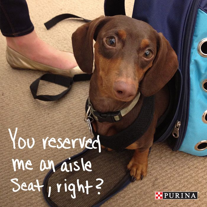 Traveling is better with pets! Check out our tips on flying with your dog!