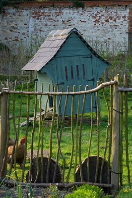 wow!!!! this is a fabulous blue painted chicken coop!!!!!! looooove entire setting!!!!!!