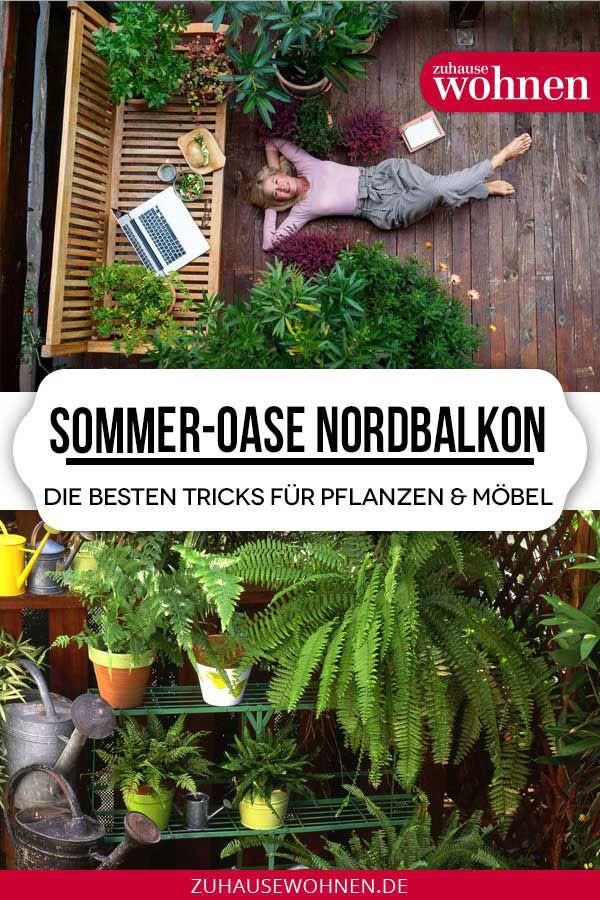 Pflanzen Fur Den Nordbalkon Tipps Zu Blumen Krautern Und Gemuse Pflanzen Balkon Balkon Pflanzen