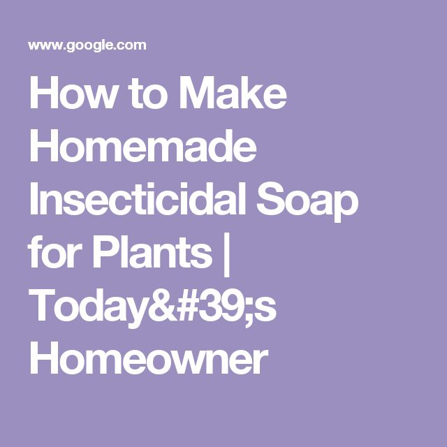 How to Make Homemade Insecticidal Soap for Plants | Today's Homeowner