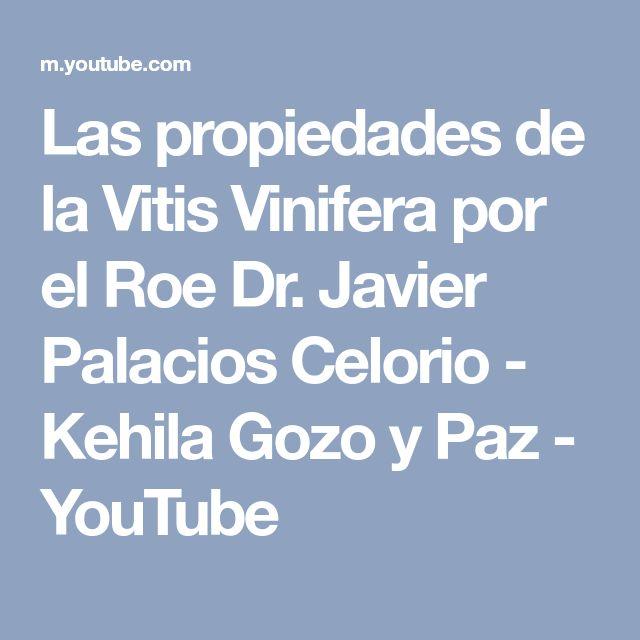 Las propiedades de la Vitis Vinifera por el Roe Dr. Javier Palacios Celorio - Kehila Gozo y Paz - YouTube