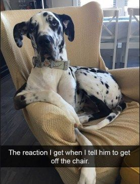 Best Animals Images On Pinterest - The 30 funniest animal snapchats of all time