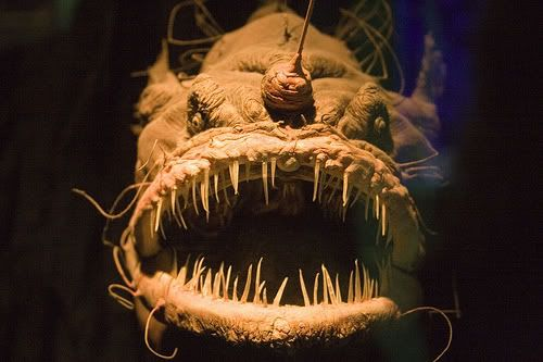 Deep Sea Angler Fish.-scary that this thing is real.