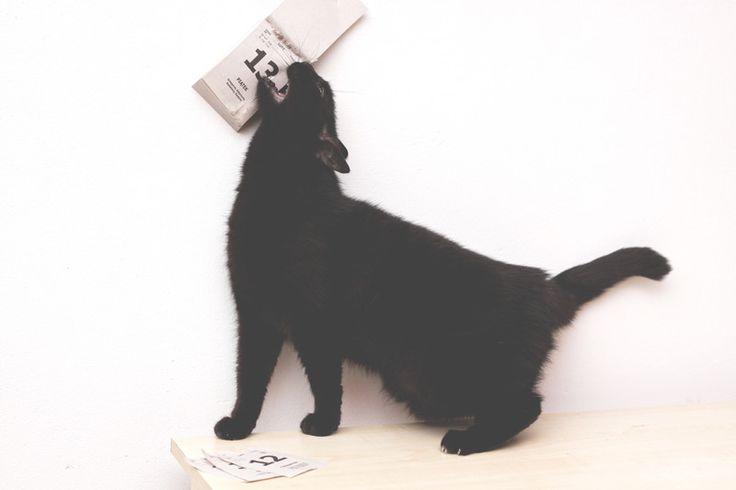 Piątek 13& Czarny kot- zdjęcie na płótnie. w Fotografia Monika Małek na DaWanda.com