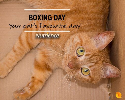 Isn't every day boxing day for a #cat? #cats #pet #pets