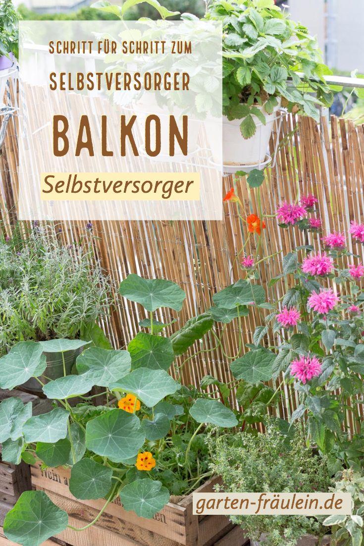 Schritt Fur Schritt Zum Selbstversorger Balkon Garten Fraulein Der Garten Blog Pflanzen Balkon Pflanzen Selbstversorger Garten