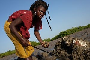 Ndra Lopes, 22, harvests oysters