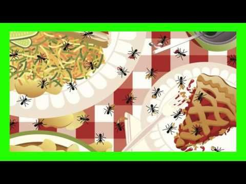 Se Puede Eliminar una Plaga de Hormigas en Casa
