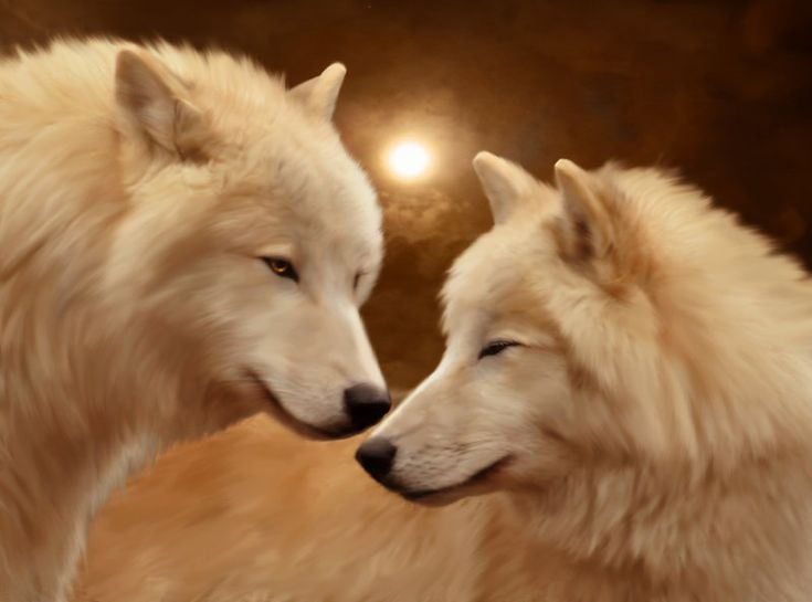 Best 25 White Wolves Ideas On Pinterest White Wolf