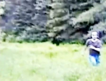 Prince Edward Island Bigfoot Footage, Sped Up