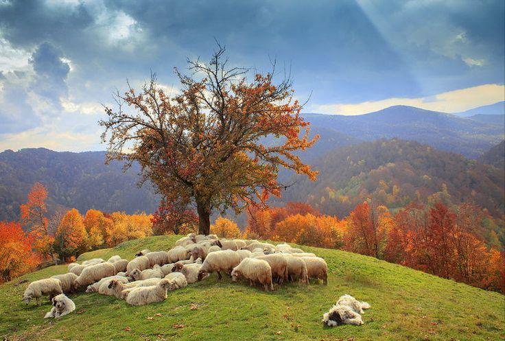 Transylwania, Rumunia