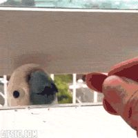 Two Birds, One Almond (You Can Pinpoint The Second His Heart Rips In Half)