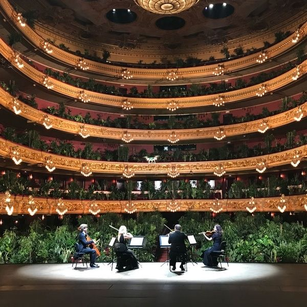 Barcelona Opera House Opens With A Concert For An Audience Of 2 292 Plants In 2020 Metropolitan Opera Concert Opera House