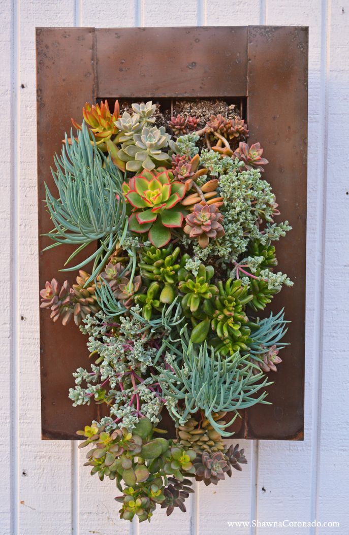 living wall garden with succulent plants shawna coronado