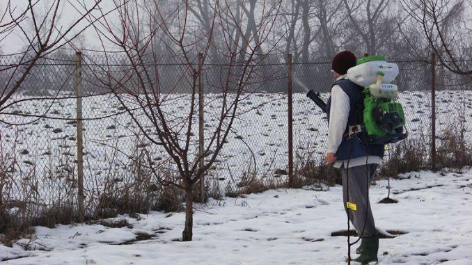 STROPIRI DE IARNĂ LA POMII FRUCTIFERI! Livada de pomi fructiferi are nevoie de îngrijiri speciale pentru a trece cu bine peste sezonul rece. Dacă pământul nu a înghețat încă, la începutul lu