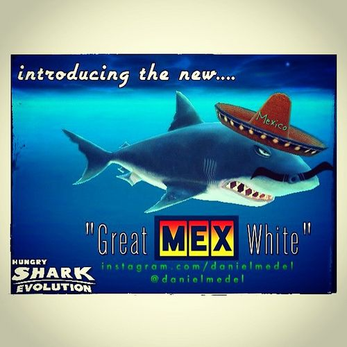 Great White Hungry Shark Evolution Shell Map our new game rolly pig is ready to download