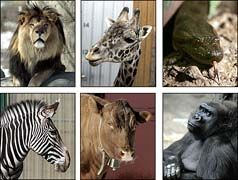 Franklin Park Zoo - Zoo New England | Boston Central