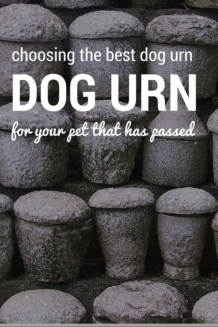 How to choose a dog urn for your pet that has passed away