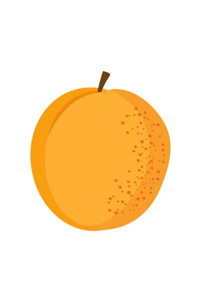 Apricot Vector #apricot #vector #fruits #handdrawvector http://www.vectorvice.com/fruits-vector