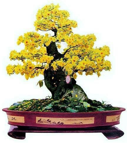 Bonsai con flores amarillas