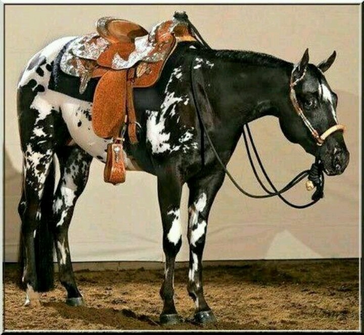 an overview of the common mans pleasure horse and the work by horse breed association The american paint horse association is the world's second-largest international equine breed association, registering more than a million horses in 59 nations and territories since it was founded in 1962.