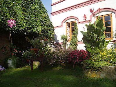 Klidné zákoutí zahrady oživují svými květy červené kanny, žlutá thunbergie (černooká Zuzana) i vděčné a odolné tmavorůžové ledovky.
