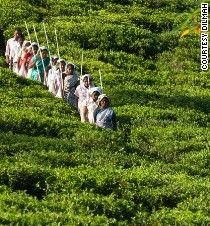 Sri Lanka's top tea experiences: Sips of history - CNN.com