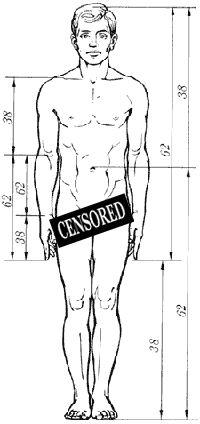 Идеальные пропорции человеческого тела