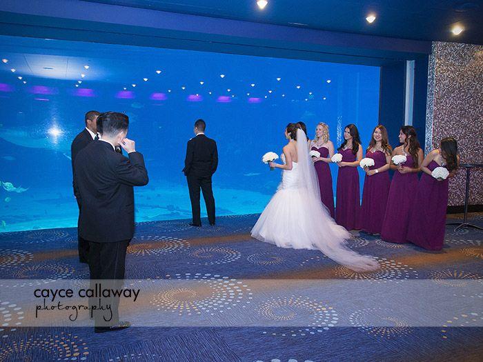 20 best georgia aquarium wedding images on pinterest