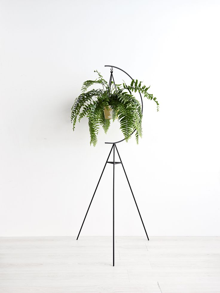 Capra Designs Crescent Plant Stand is made in Melbourne from powder coated  steel.   159cm high X 68cm wide