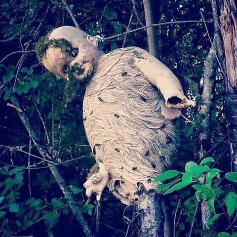 【閲覧注意】森に捨てられた人形を元にスズメバチが作った巣が怖すぎる「バイオハザードに出そう」「ある意味芸術」 - Togetterまとめ