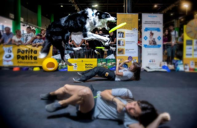 Llega Nuestros Perros un encuentro con tus mejores amigos en @LaRural_BsAs @NPerros   Habrá talleres de lectura asistidos por perros una bañera para aprender a bañar a las mascotas concurso de peluquería canina demostraciones de perros rescatistas y muchas actividades más. Será del 5 al 9 de abril con todas las novedades del mundo canino  Buenos Aires marzo 2017.- Del 5 al 9 de abril de 10 a 20 hs. llega una nueva edición de Nuestros Perros la exposición más tierna y divertida en La Rural…
