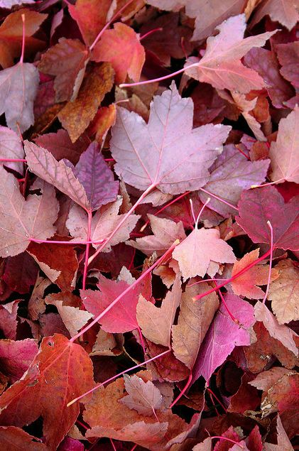 Autumn leaves in the most beautiful hues of marsala, lilac, burnt orange, and plum