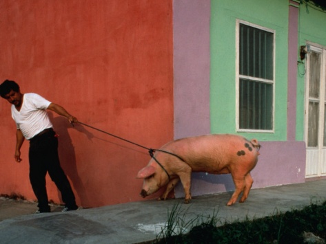 Villager Pulling Pig on Rope, Tlacotalpan, Veracruz-Llave, Mexico