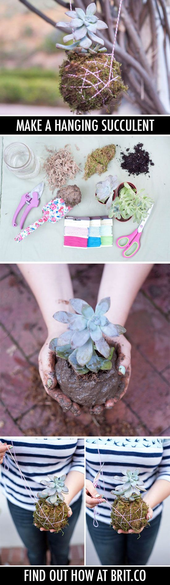 How to Make a Hanging Succulent | Brit + Co.
